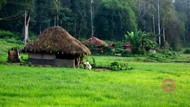 Wayanad Travel Packages